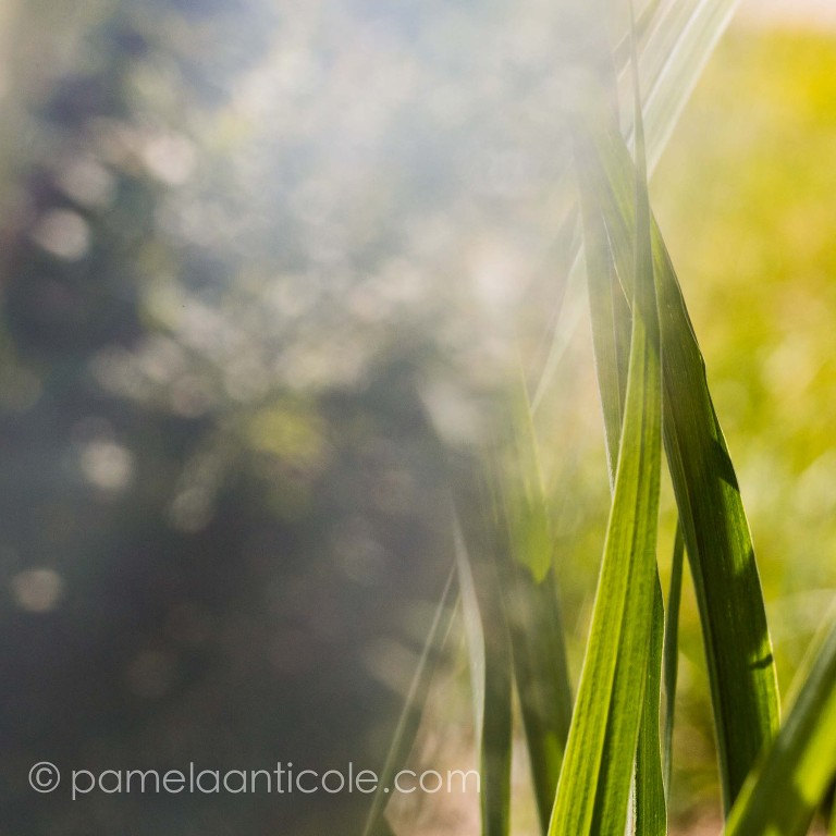 fine art nature print green prism photography