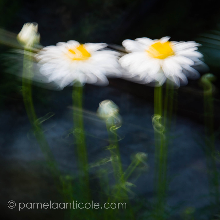 light painting daisies abstract fine art print