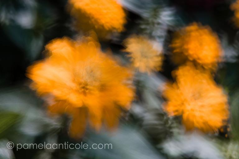 nature fine art print yellow flowers