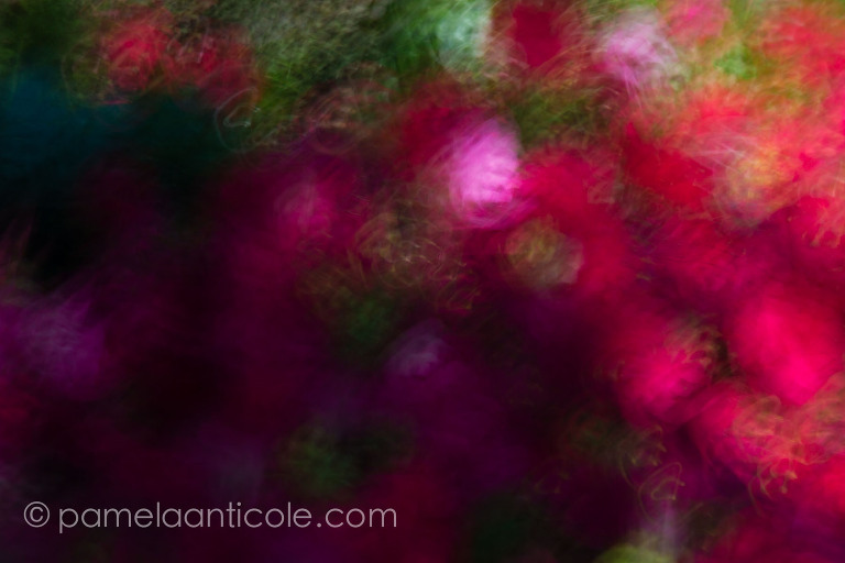 bright and colorful abstract nature wall art