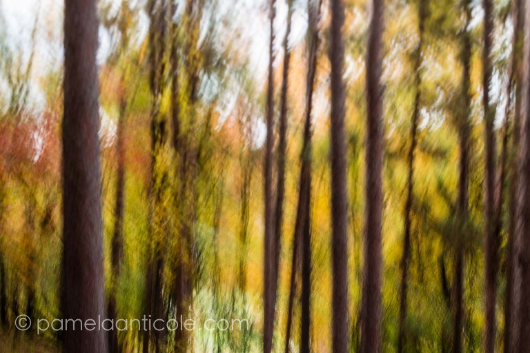 autumn fall foliage nature print, fine art, icm, controlled long exposure, intentional camera movement, north park pittsburgh, pittsburgh original art for sale