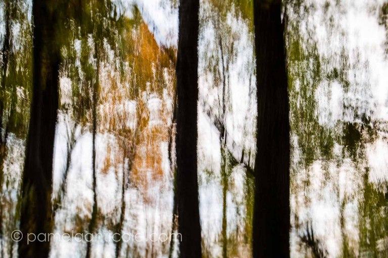 abstract fine artist pamela anticole, moraine state park, autumn trees, nature print, wall art