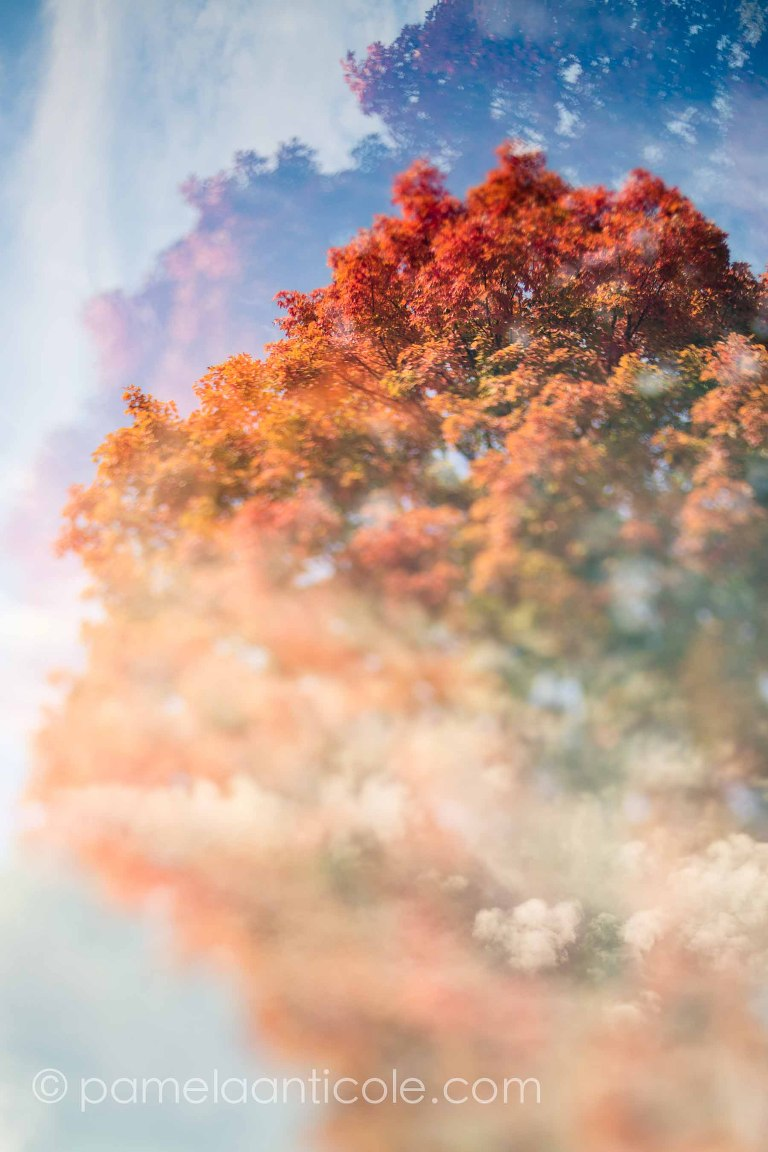 unique nature print, colorful, red and orange, ethereal, creative, multiple exposure, icm, pamela marie photography, fine art for sale, original pittsburgh art