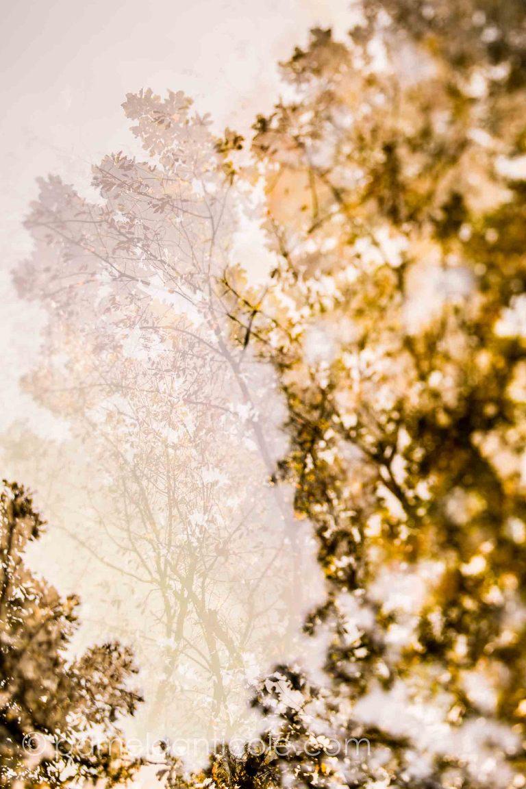 Leaves of lace, pittsburgh north park art print, fall foliage, autumn nature print, multiple exposure, fine art nature print, abstract nature print, icm, controlled long exposures, tilt shift, pamela marie photography, pamela anticole, north park pittsburgh gifts, unique pittsburgh gift, pittsburgh housewarming gift, north hills pittsburgh art print, pittsburgh original art