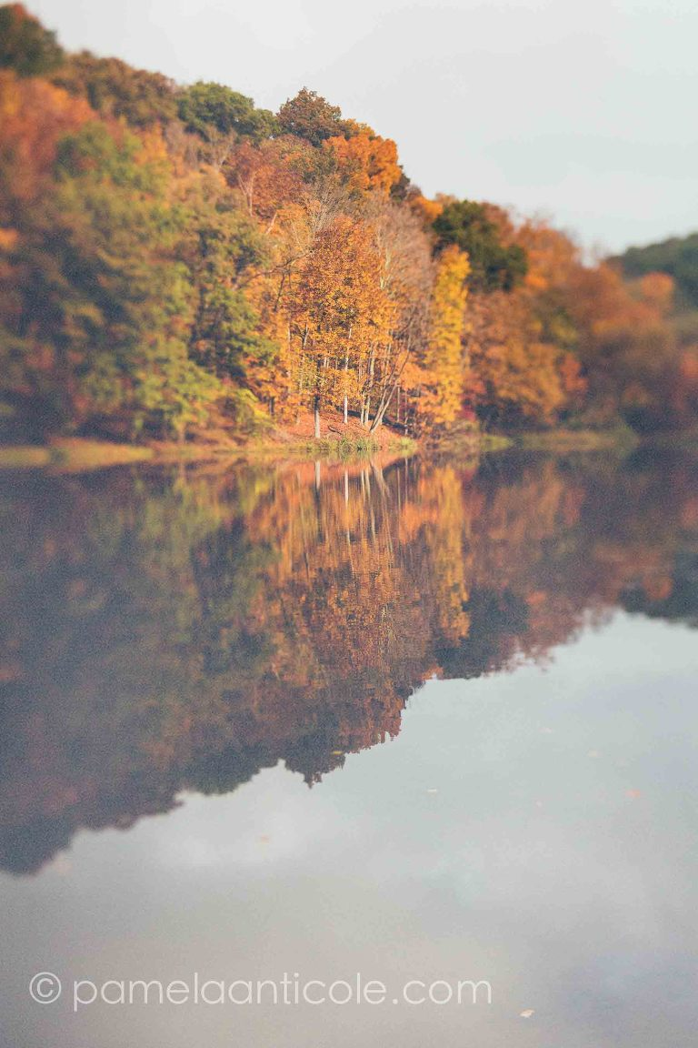 unique nature art print, pittsburgh original art, fall foliage, lake, yellow and orange trees