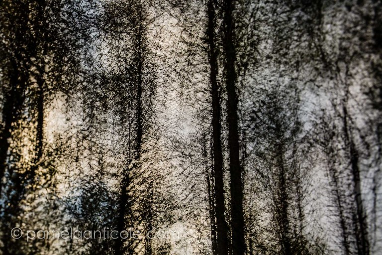 textured photograph of birch trees at night, multiple exposure icm fine art print, pittsburgh original art, moraine state park photos, abstract nature print, abstract nature wall art, impressionistic photography