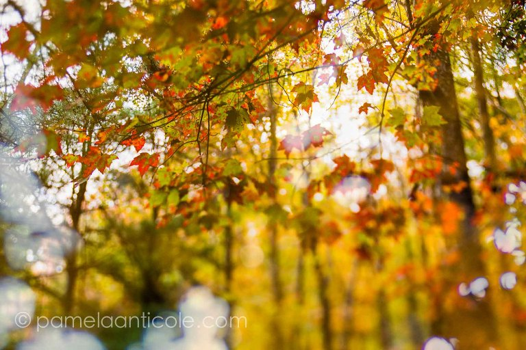 fall foliage, abstract fine art photography, unique nature photography, creative nature prints, colorful leaves