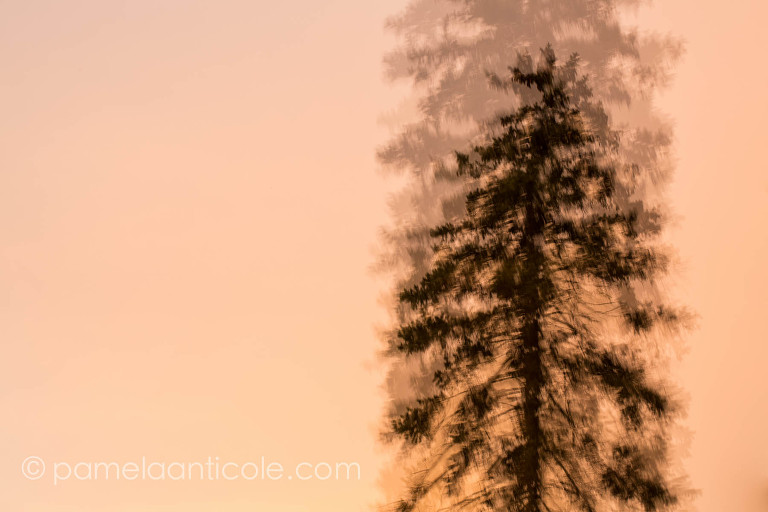 abstract sunset nature photography, evergreen tree silhouette, local pittsburgh art, unique gift for hiker, creative gift for nature lover