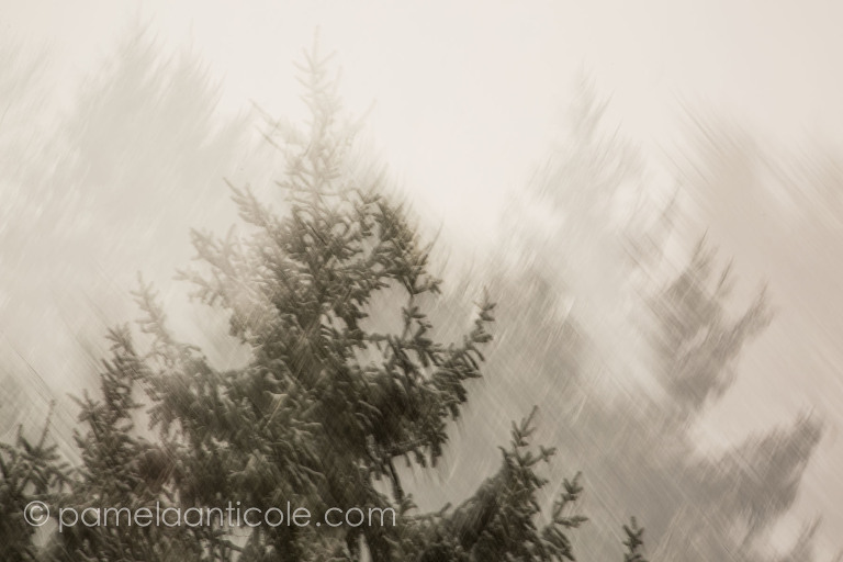 abstract winter christmas scene, foggy evergreens