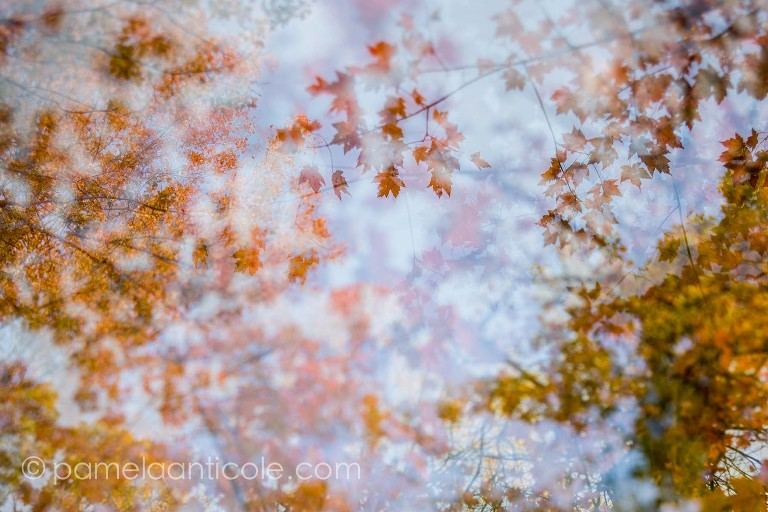 creative nature photography, energy of nature, natural energy photography project, gift for nature lover
