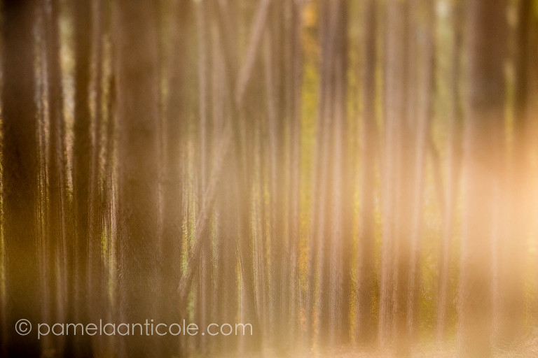 creative nature photography, multiple exposure in-camera, birch trees, hiking gifts