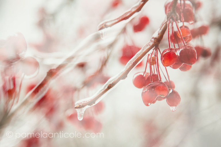 colorful red nature art, abstract unique creative wall art photography, pittsburgh original art, icy morning