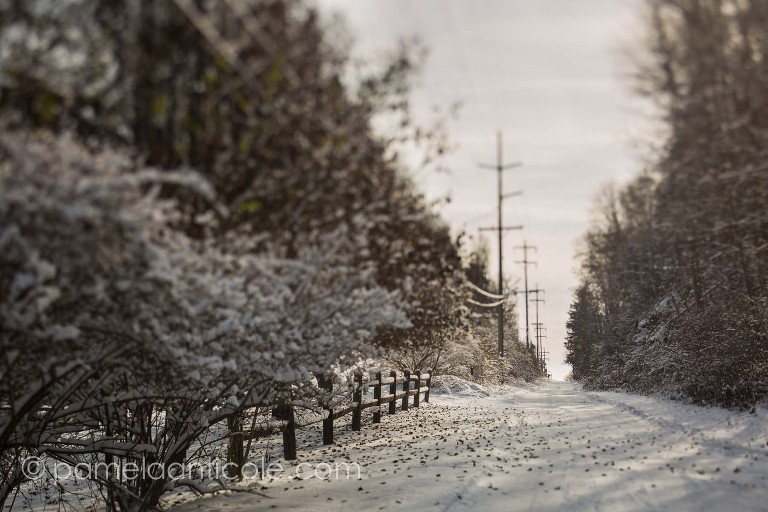 unique pittsburgh winter art, original artist from pittsburgh, wall print for sale, creative winter nature photography