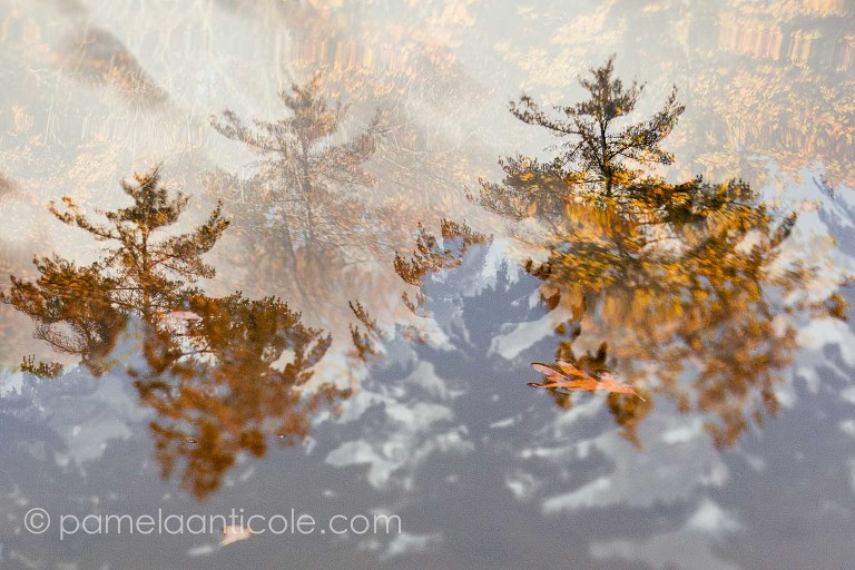leaf floating in water, fall foliage, northern pennsylvania, original pittsburgh artist, unique gift for pittsburgher, modern nature wall art