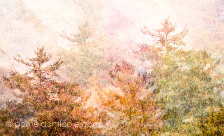 painterly modern art, hipster wall art, creative gift for pittsburghers, northern pa, hiking photography, woods, original pittsburgh artist