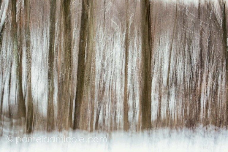 abstract winter art trees in snow, original pittsburgh artist, nature photography with energy, double exposure, intentional camera movement