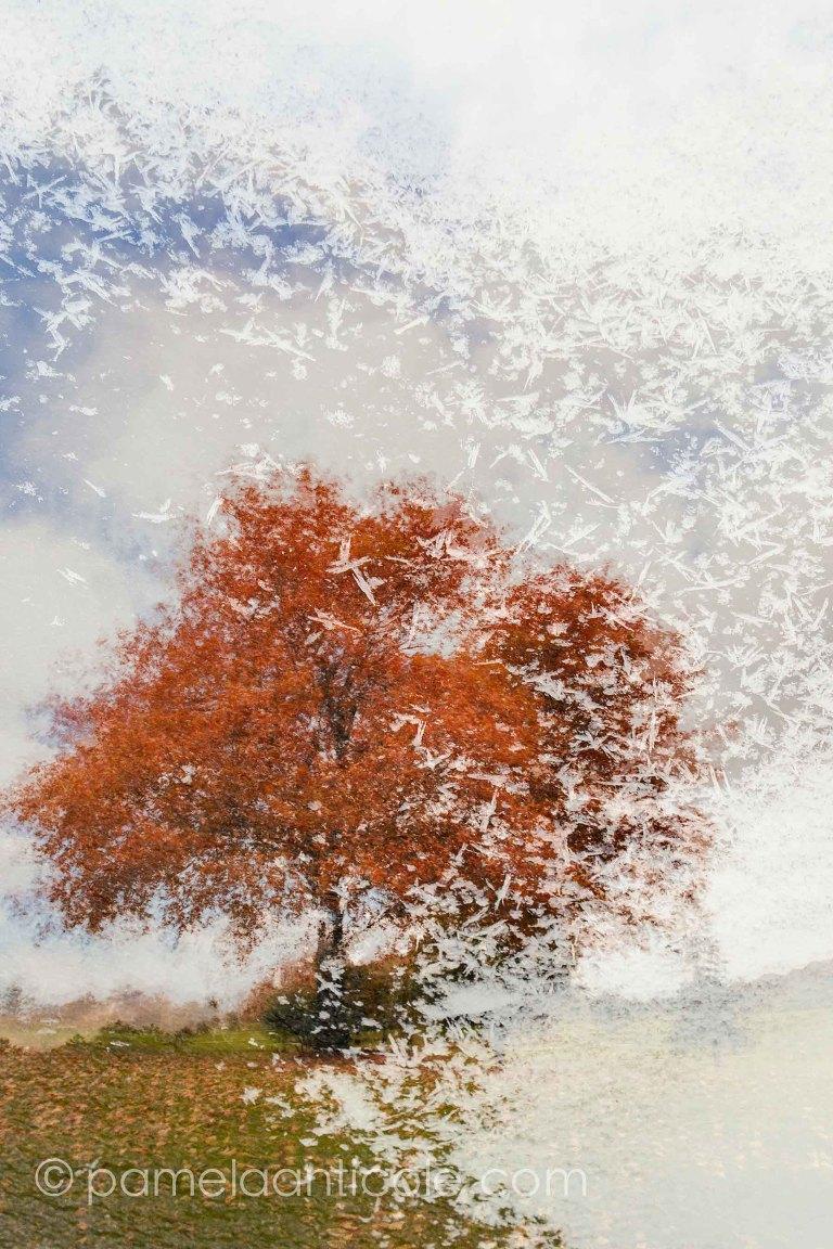 original pittsburgh artist, abstract nature art, seasons wall print, north park, frick park, pennsylvania, fall foliage
