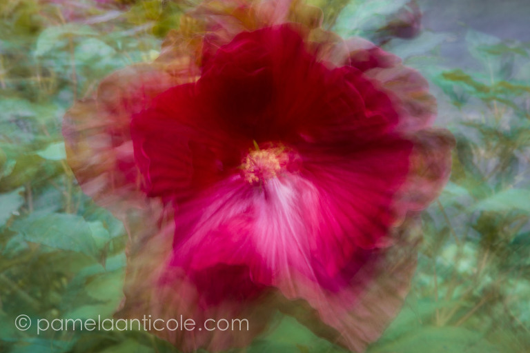 abstract nature photography, original pittsburgh artist, red flower wall art, purple flower art, abstract flower, unique nature art, gift for nature lover