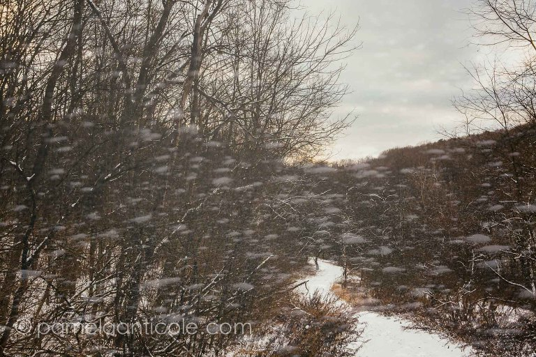 abstract winter scene, pittsburgh original artist, unique nature art, intentional camera movement, double exposure