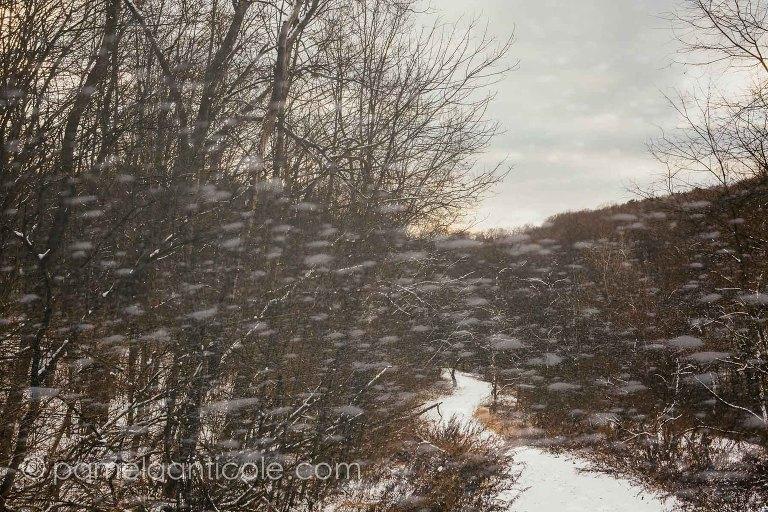 abstract winter scene, pittsburgh original artist, unique nature art, intentional camera movement, double exposure