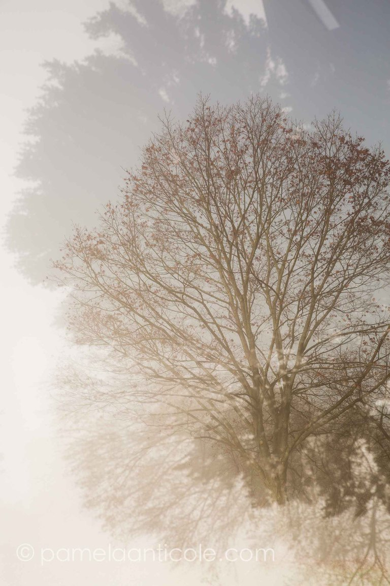 abstract dreamy nature photography, pittsburgh fine art nature photographer, unique nature wall art, dreamy tree, fog