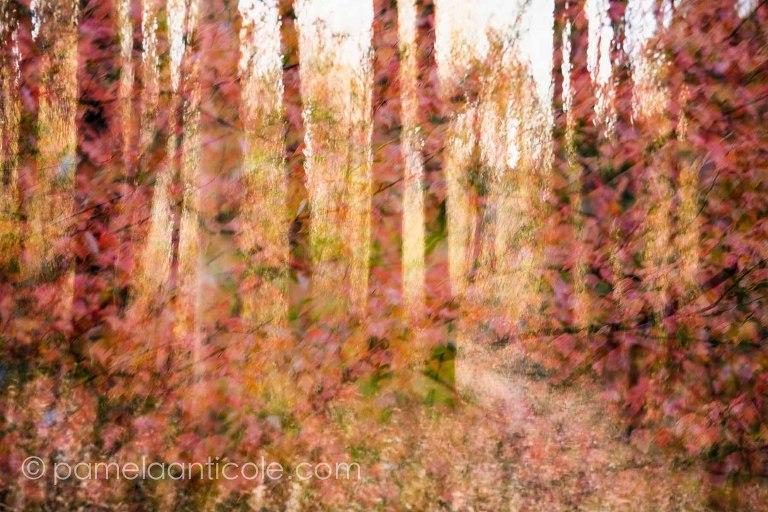 abstract nature art, northeast nature art print, fall foliage