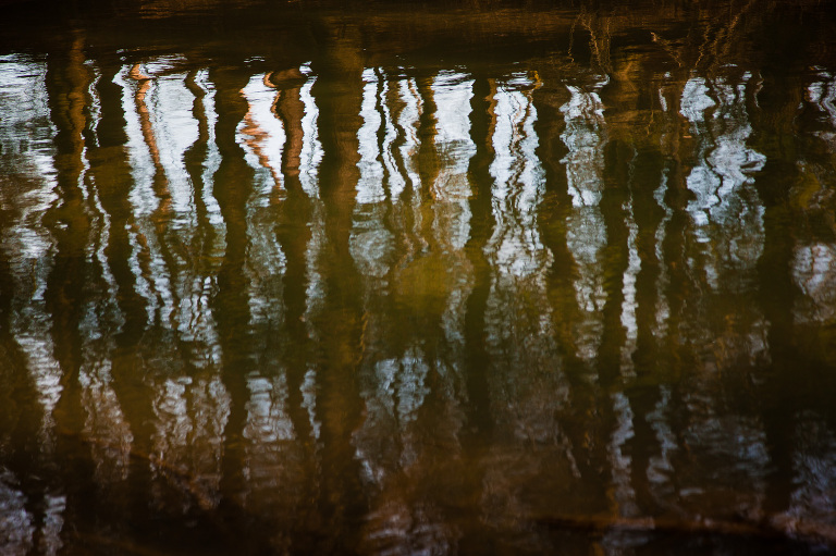 sunset tree reflections, north park pittsburgh, original pittsburgh art, abstract nature photography