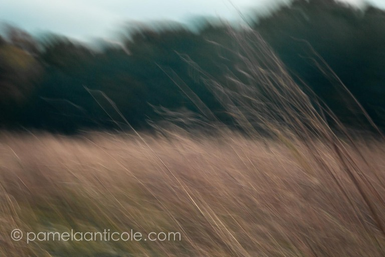 abstract nature art, intentional controlled camera movement, icm, sunset on the plains, windy wispy plants, muted nature photograph, pittsburgh original art, abstract muted nature wall art