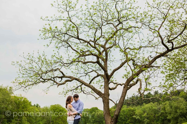 artistic bride and groom photo under a tree, experienced pittsburgh wedding photographer, relaxed engagement photos in pittsburgh, relaxed wedding photos, hartwood acres engagement session
