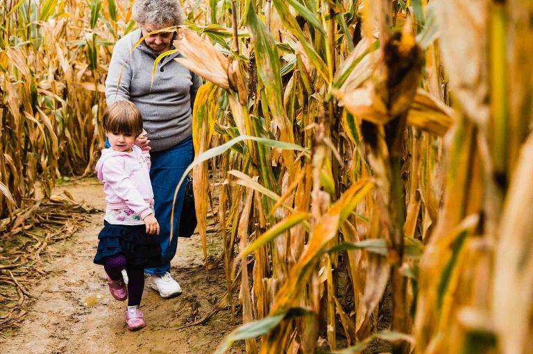 little girl pulling her grandma through a muddy corn maze at shenot farm in pittsburgh pa