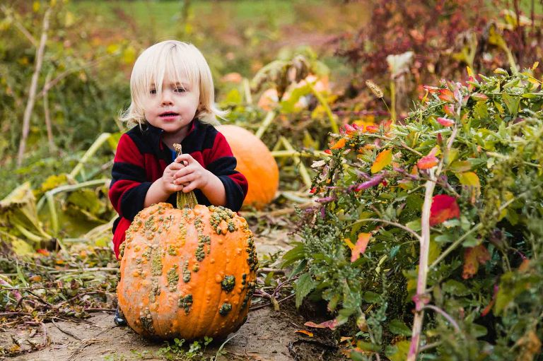 toddler boy with long curly blond hair and runny nose trying to pick up a big pumpkin in a pumpkin patch