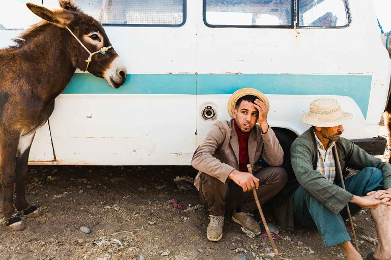 man with cane squats by donkey, clutches his head with exasperated expression.