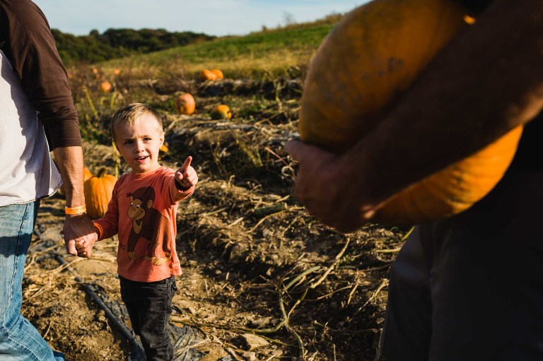 little boy holding his dad's hand and pointing up to a pumpkin in a pumpkin patch