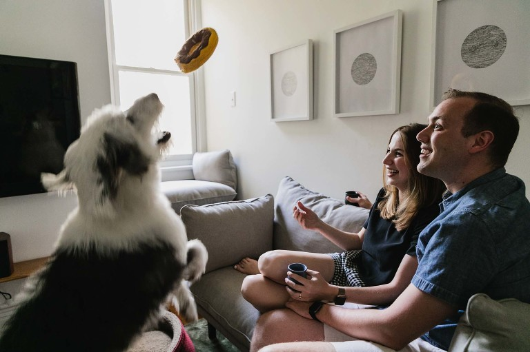 man and woman throw toy in the air to their sheepdog pet, from a living room sofa