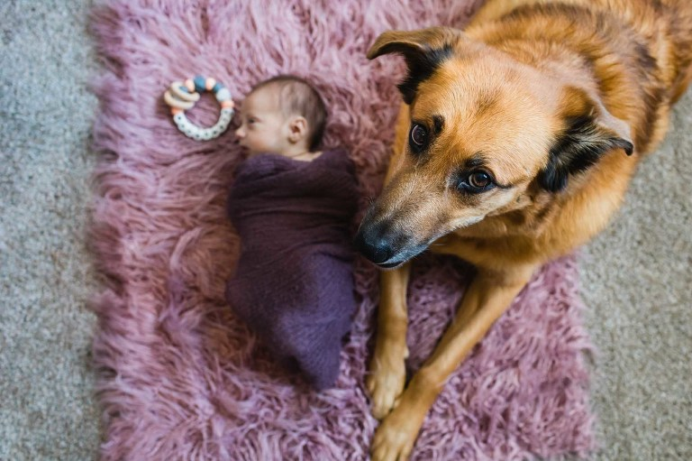 big brother dog protecting his baby newborn girl cuddled up below him