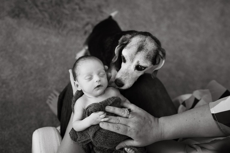 black and white photo of little newborn baby wrapped up and snuggling on mom's lap while puppy sniffs her ear